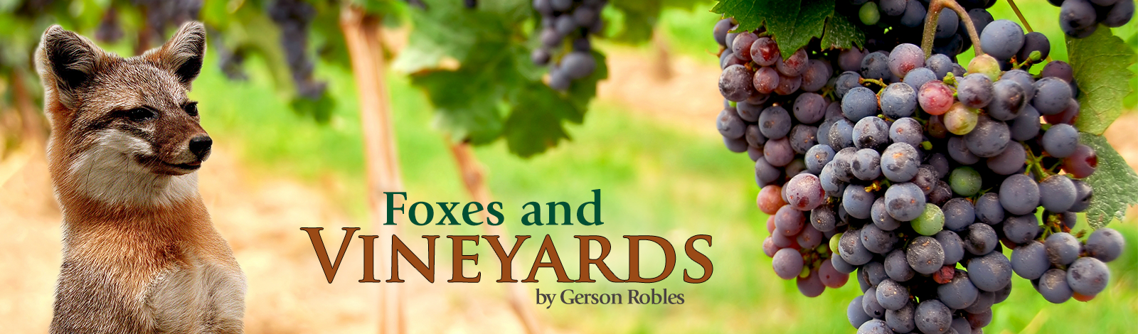 Foxes and Vineyards
